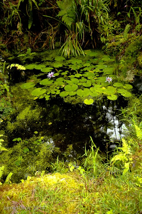 On Terence's Pond -1