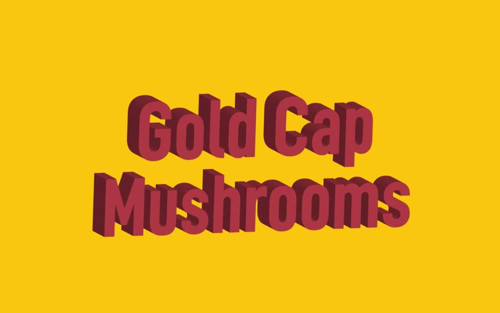 Gold Cap Shrooms Guide: Spores, Effects, Identification