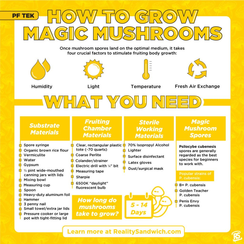 how-to-grow-magic-mushrooms-infographic