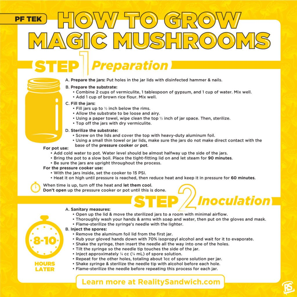 how-to-grow-magic-mushrooms-infographic-b